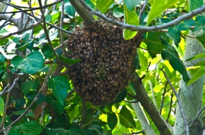 Swarm on Branch