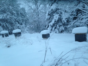 Hives in Deep Snow