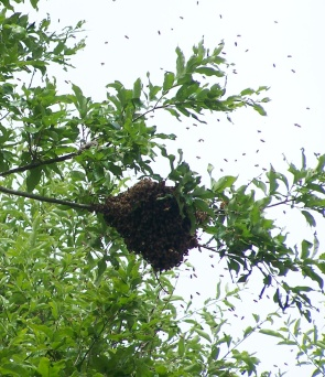 A swarm almost out of reach